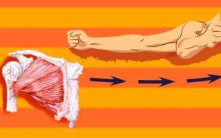 Как в домашних условиях накачать мышцы груди