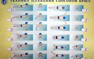 Как правильно плавать брасом